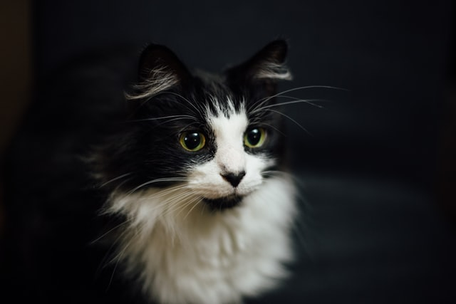 There are many fantastic and perfect name choices for your female tuxedo cat.