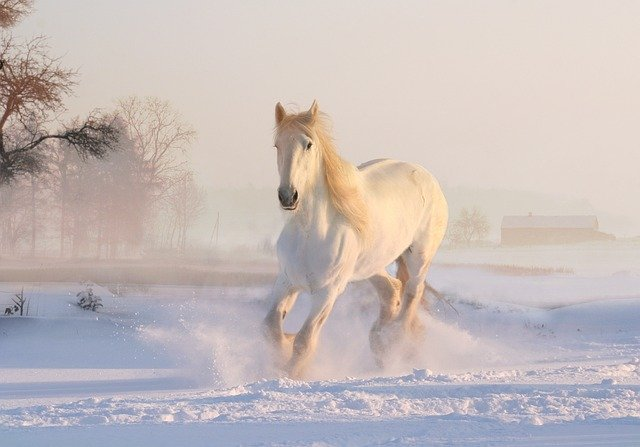 A white horse is amongst the most majestic creatures of all time.