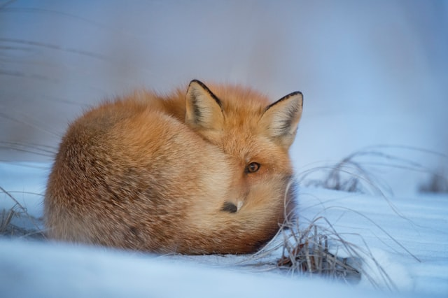 Foxes are beautiful beastly creatures and there are many names that make them stand out even more.