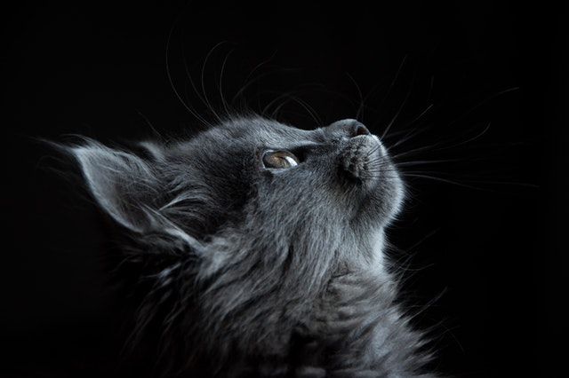 (Mythical cat names have a unique and divine vibe to them.