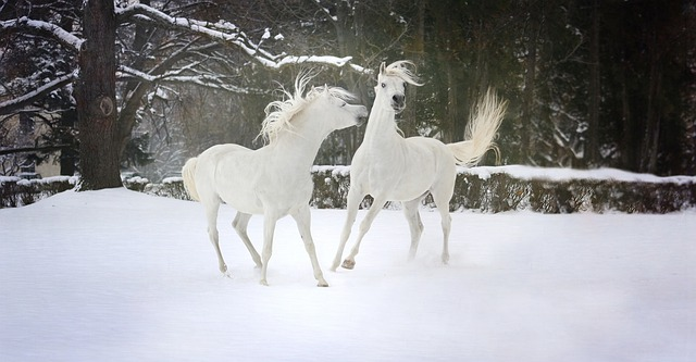 Many Gods in various forms of literature often owned horses.