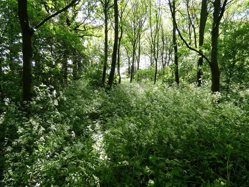 Trees, ferns and a variety of shrubs and flowers in a woodland.