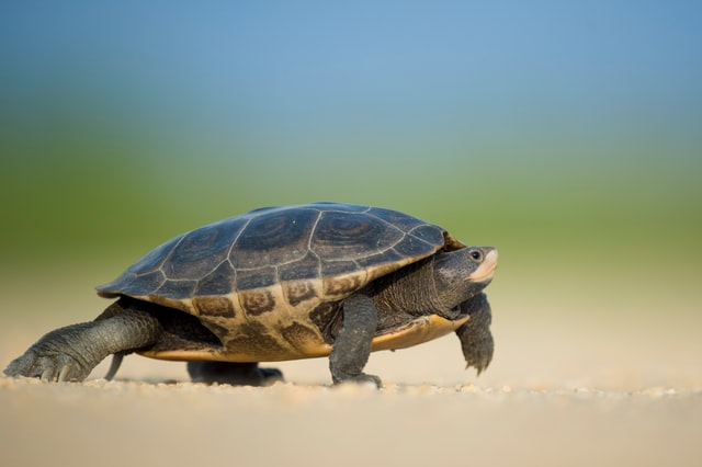Turtles can easily identify their own names.