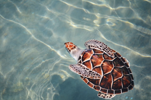 A turtle name should sound as unique and cute as the beings themselves.