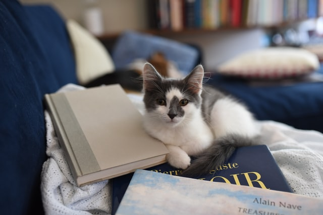 Popular cats from fiction has inspired many cat names.