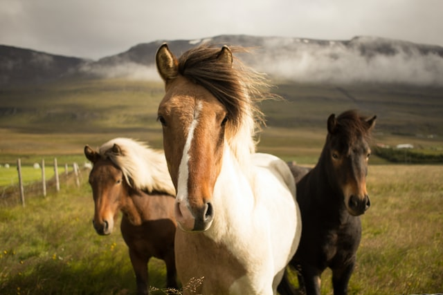 Choose a horse name that suits your pet.