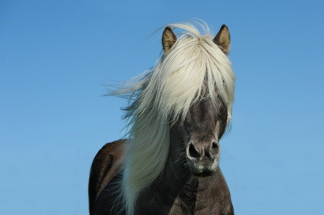Pick a name from famous horse names from races.