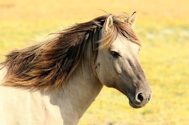 Find the best names that mean strong for your colt horse