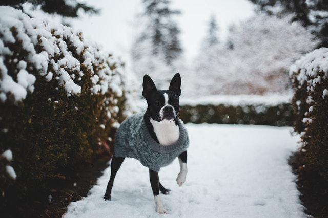 Boston terriers are really cute and deserve wonderful names.