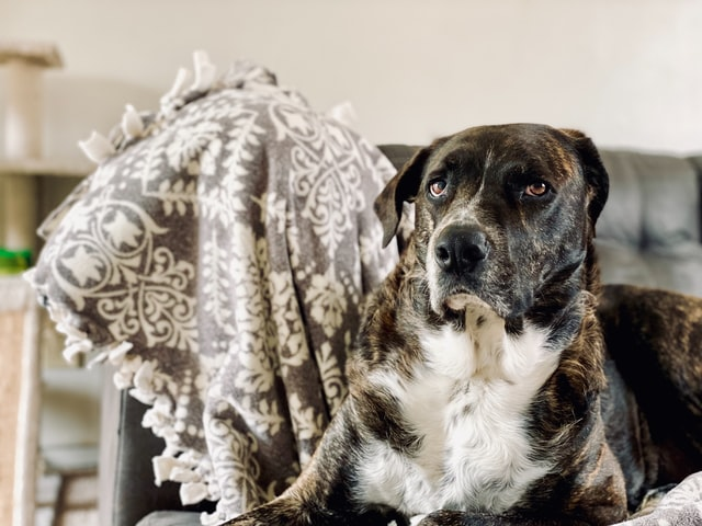 Gender neutral dog names are a great option for brindle dogs.