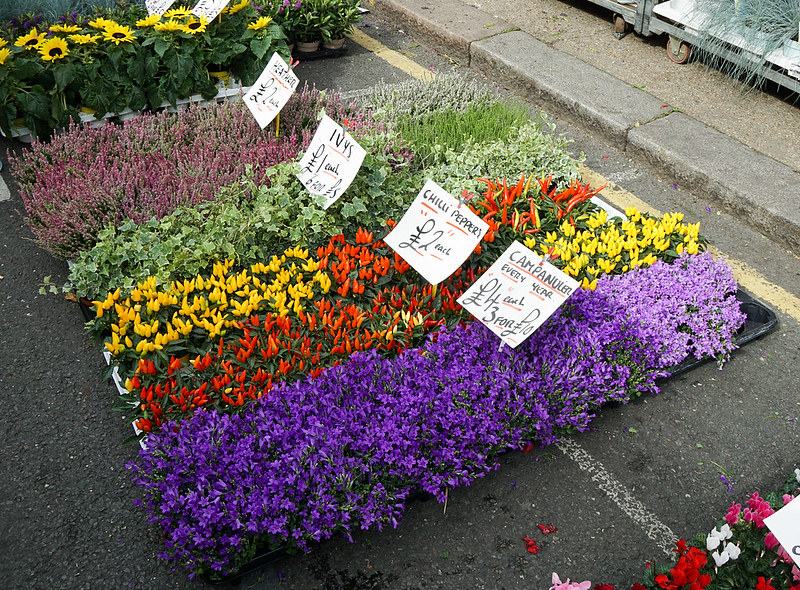 Different coloured rows of flowers at Columbia Road Flower Market.
