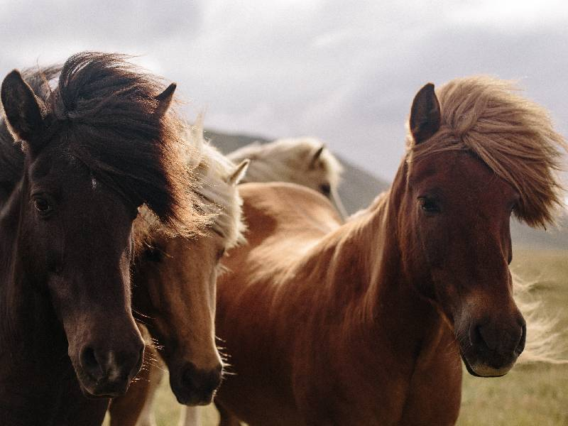 Why not choose a gender-neutral name for your male or female horse.