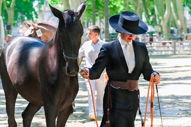 Show horses are some of the most highly trained animals on the planet.