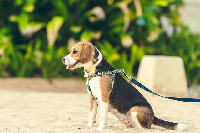 These nature-inspired names work wonderfully for male dogs.