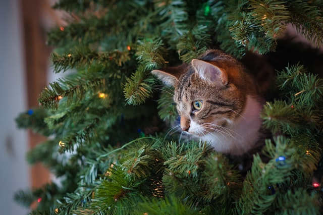 Christmas cat names inspirations can come from anywhere.
