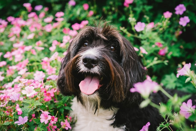 Flower names are a beautiful choice for your dog.