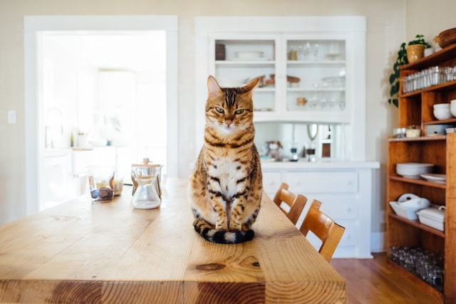 Food cat names are a funny choice for your kitten.