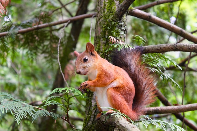 Select the cutest name for your male squirrel.
