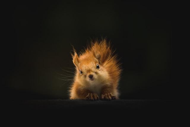 Your little pet deserves a super adorable name.