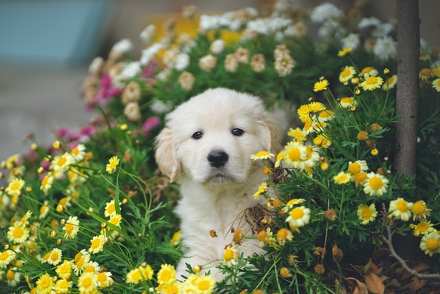 Why not choose a flower inspired dog name?