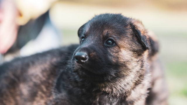 Viking names will suit your new pup.
