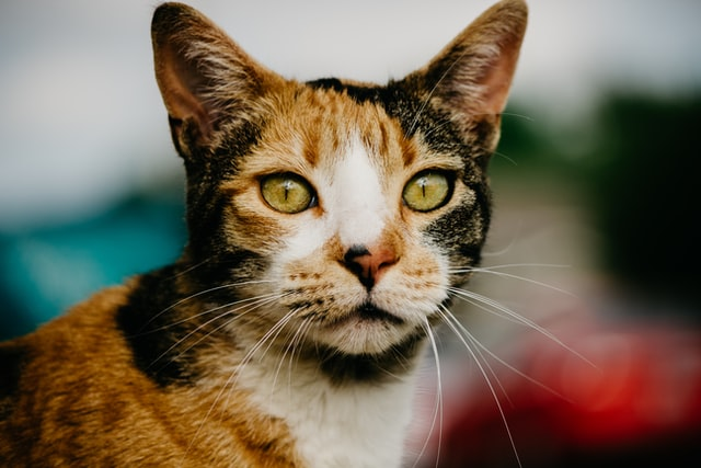 Calico cats deserve lovely names.