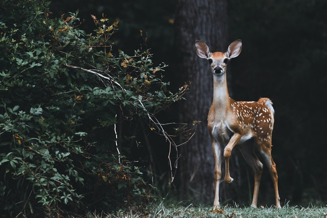 Deer are beautiful and elegant creatures.