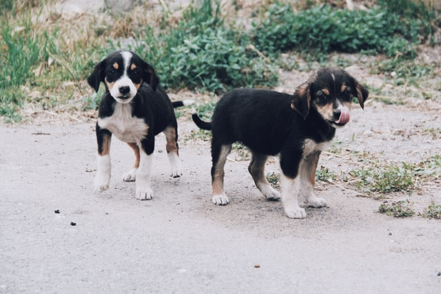 Bernese mountain dog breed deserves unique and attractive names.