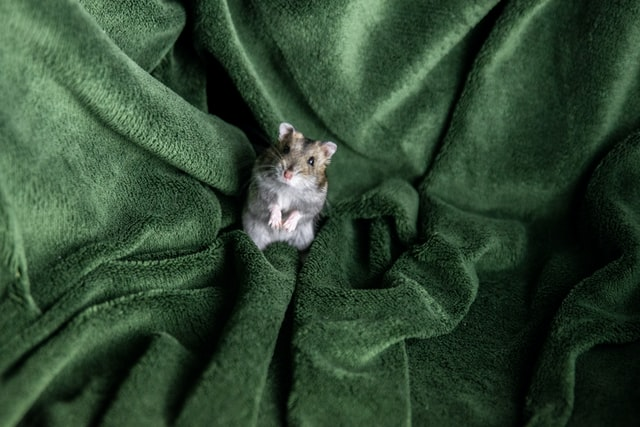 Cute hamster names are known to enhance your small pets' identity the most.