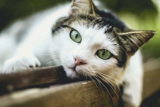 Cool cats deserve cool cat names.