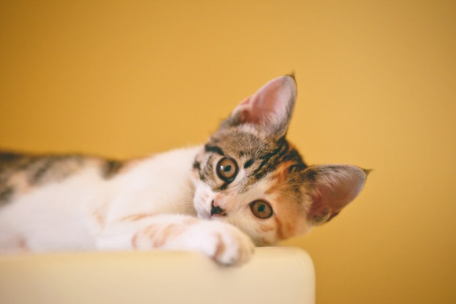 Finding the best names for a cat can be difficult, these cool cat names should help.