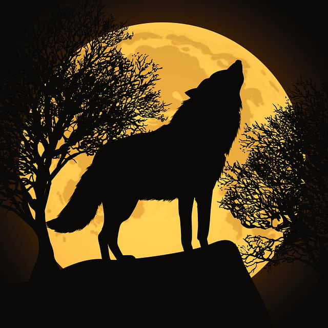 Werewolves come out on a full moon according to folklore