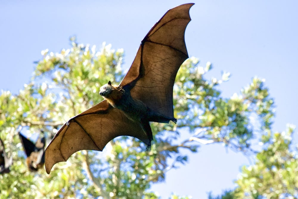Find the best bat names here