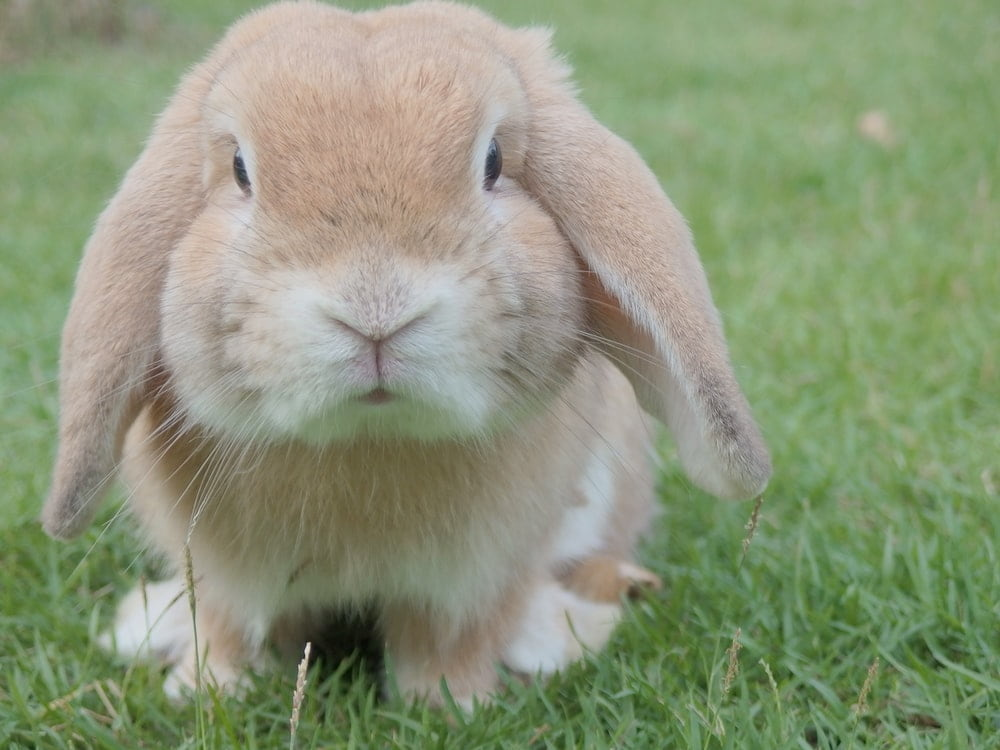 Find the best rabbit name ideas here.