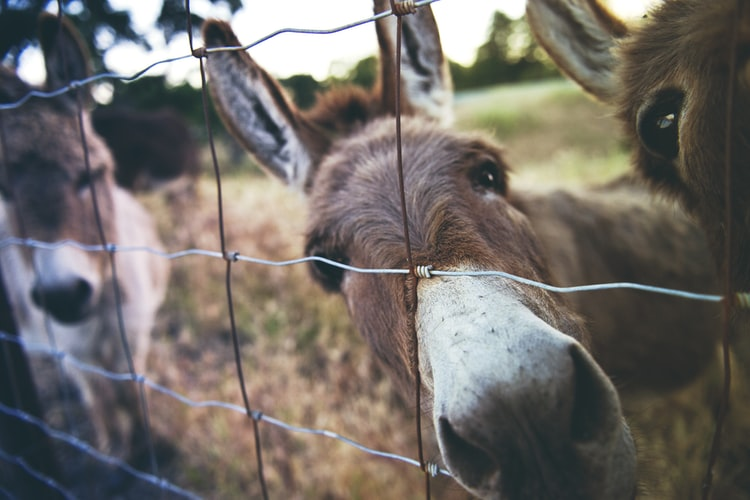 Pick a cute and funny name for your donkey