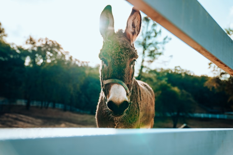 Your donkey deserves the best name