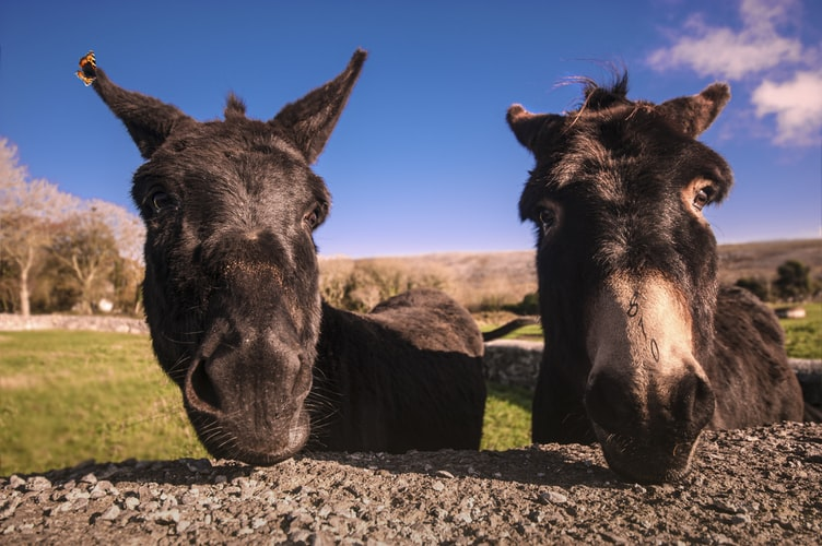 Pick funny donkey names for your pet
