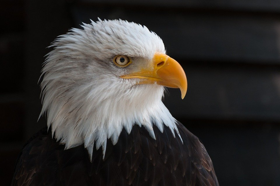 There are numerous names for your pet eagle