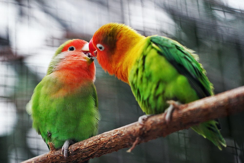 Unique bird names are becoming quite popular among pet parents