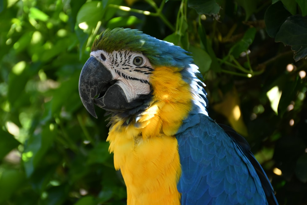 Cool bird names for your parrot helps him stand out from the rest