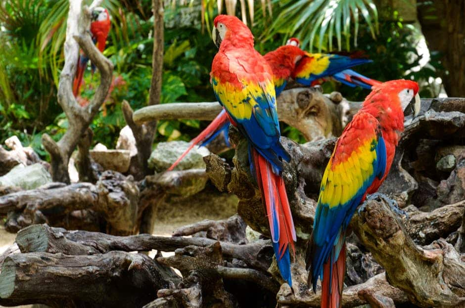 Famous parrot names will make a great pet name