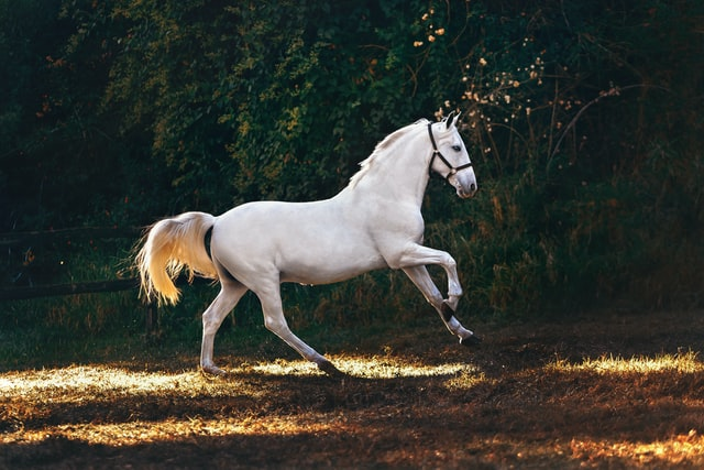 Choosing a name for a horse doesn't have to be hard with our list of handpicked names.