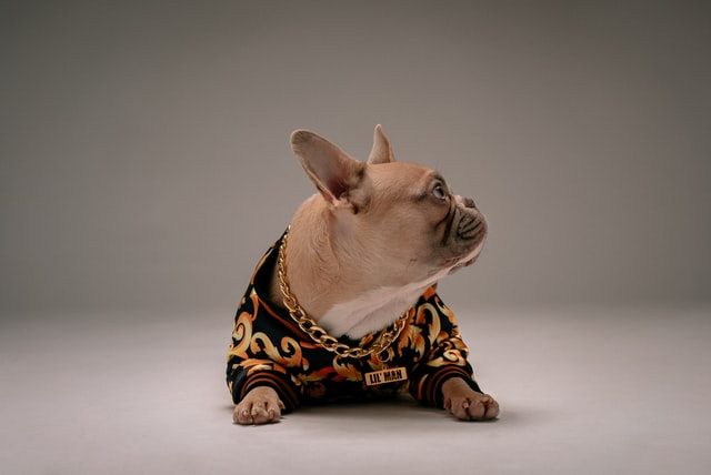 There are hundreds of cute French bulldog names for your new puppy