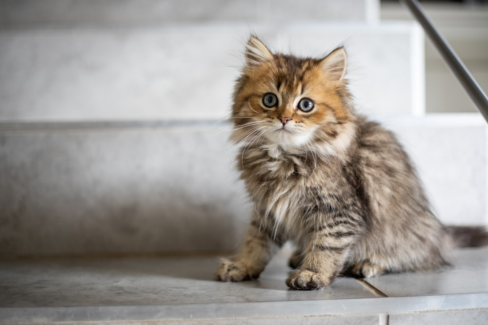 The cat names can be inspired by mythology, fantasy, or even astrological events