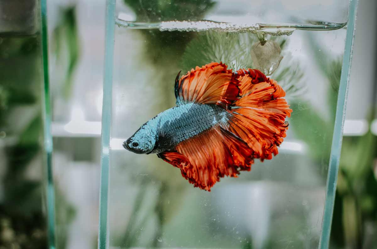 Get a cool fish name for your betta fish.
