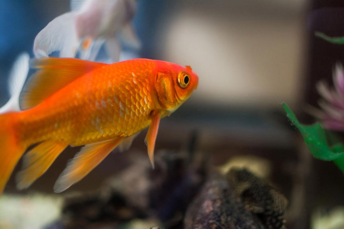 You can either select some funny fish names or popular names for your fish but a name is a must for your pet.