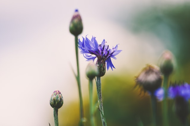 There are various names for flowers that are blue but among them, one of its examples is Blue Star.