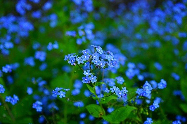 Blue flowers spread a sense of positivity.