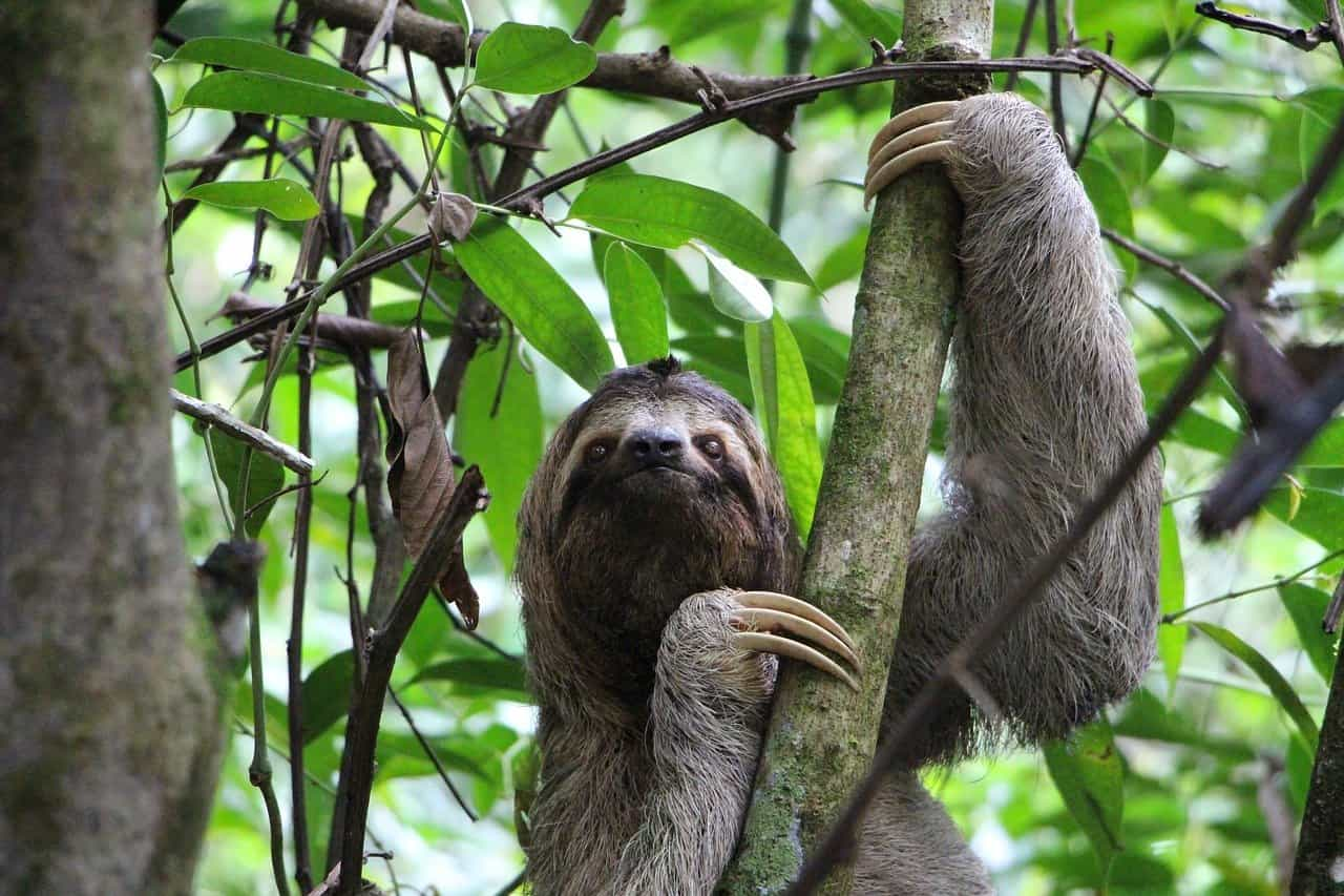 Sloths are mostly harmless.