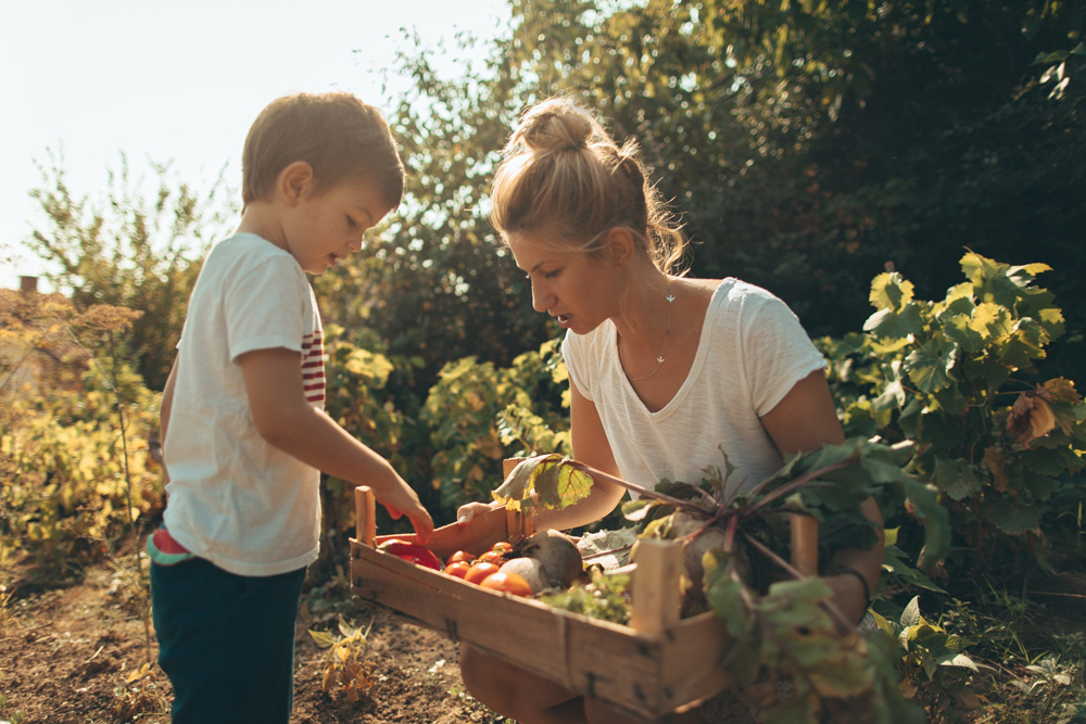 Mother and son picking vegetables in the garden.